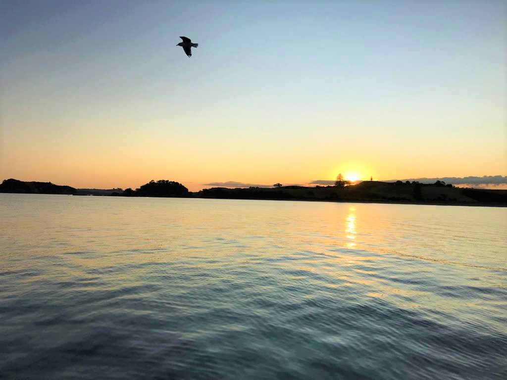 sailing bay of islands and auckland harbour cruise sunset dinner cruise